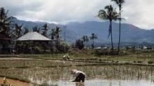 إندونيسيا البرية برنامج