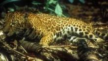 Reise entlang des Amazonas Programm