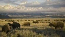 Amerikas National Parks Programm