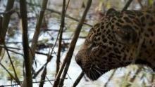 الحياة البرية في كولومبيا برنامج