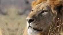 Clanul leilor documentar