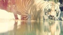 Büyük Kedi Oyunları SAYFAYA GİT