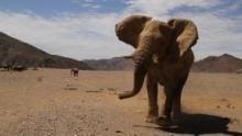 Az elefánt lelke film