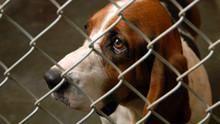 إنقاذ حيوانات كاترينا برنامج