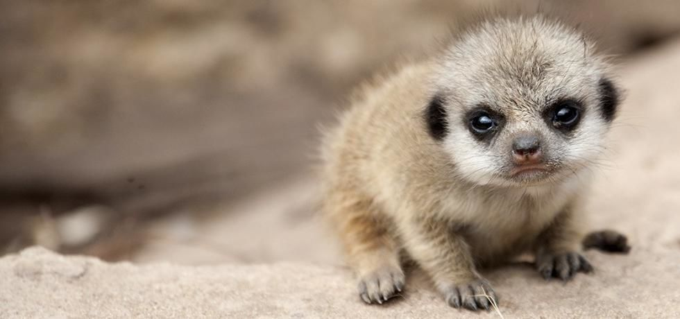 New Extreme Animal Babies