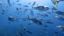 Kubas verstecktes Riff Programm