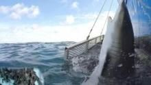 Blitzkrieg Sharks show