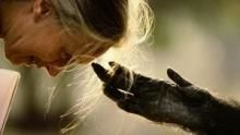 Especial Jane Goodall  Serie