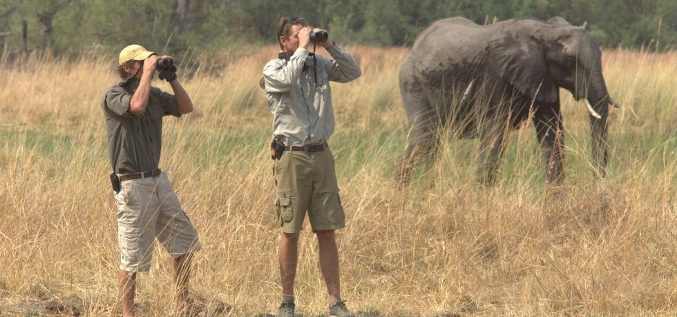 Safari con los hermanos Reed