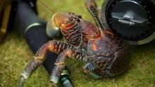 釣魚樂無窮 節目
