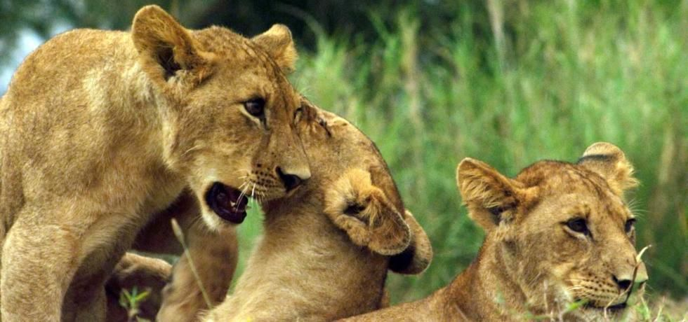إعادة الحياة لمملكة إفريقيا البرية