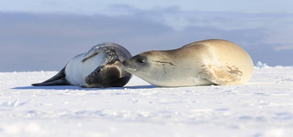 極地探索:南極洲
