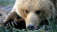 Les ours, mon fils et moi Voir la fiche programme