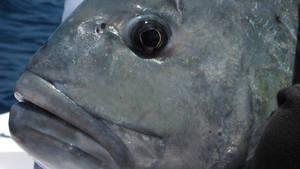 Ulovljeni: Pecanje čudovišta