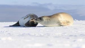 القارة 7: أنتاركتيكا