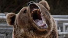 Hollywood's Killer Bear show