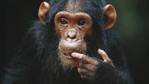 مملكة القرود