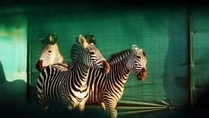 تولد دوباره ی حیات وحش آفریقا