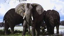 Les éléphants du Kilimanjaro Voir la fiche programme
