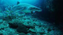 Underwater Oasis show