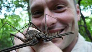 Entre Insectos e  Outras Feras