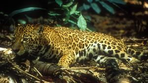 Ταξίδι στην Αμαζονία