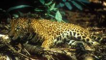 Ταξίδι στην Αμαζονία ΔΕΙΤΕ