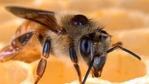Arıların Sessizliği