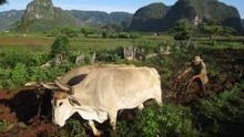 Kuba, az utolsó édenkert film