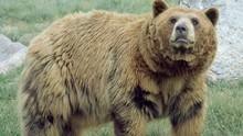 勇闖熊穴 Bear Evidence 節目