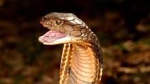 Τα πιο φονικά ζώα στον κόσμο ΔΕΙΤΕ