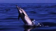 Στρατιά δελφινιών ΔΕΙΤΕ