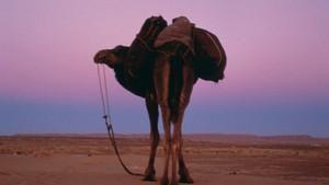 Sahara: Jennis dans Bilde