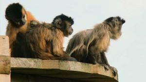 Małpie zycie zdjęcie
