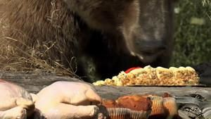 Gormet Grizzly Feast photo