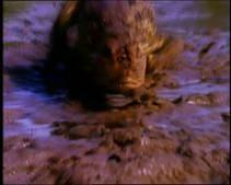 Krokodillen jagen op piranha's Foto
