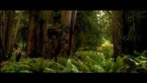 """غابات """"أحمر الخشب"""" العملاق صورة"""