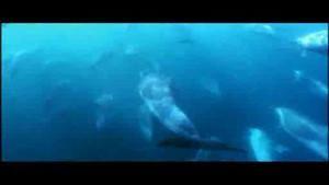جيش الدلافين صورة