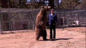 Schicksal eines Bären Foto