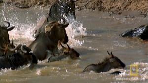 Slag om de rivier Foto