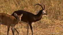 Sudanski kob šišmiši  emisija