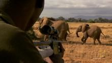 SMS de la elefanți documentar
