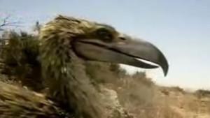 Terror Raptors photo