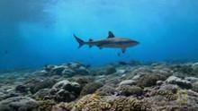 Shark Eden show