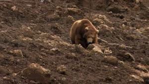 Kamchatka Landslide photo