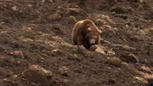 Kamchatka Landslide show