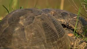 The Great Divide Spur-Thighed Tortoises photo