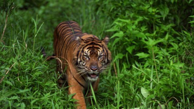 shows subject wildlife