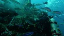 Underwater Cameras 節目