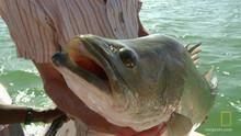 Velká ryba pořad